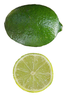 Citrus Lime, Key Lime, Mexican Lime, Mexican Thornless Key Lime