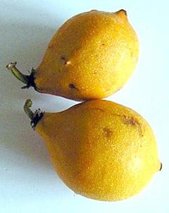 Garcinia brasiliensis Bacupari PFAF Plant Database