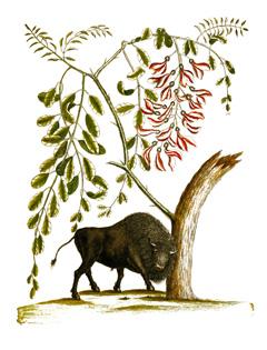 Gliricidia sepium Gliricidia, Forest Lilac, Mexican Lilac PFAF Plant