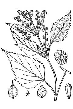 guide to common edible plants of british columbia