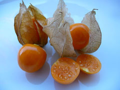 Physalis peruviana Goldenberry, Peruvian groundcherry