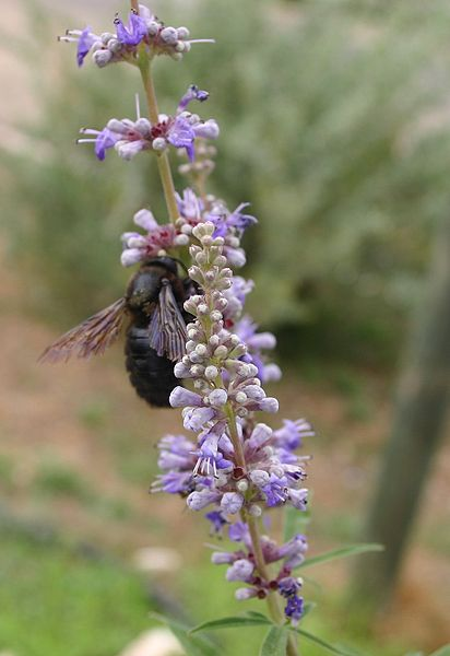 Natural herbs such as Vitex ...