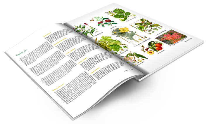 Edible Plants Inside Book Cover