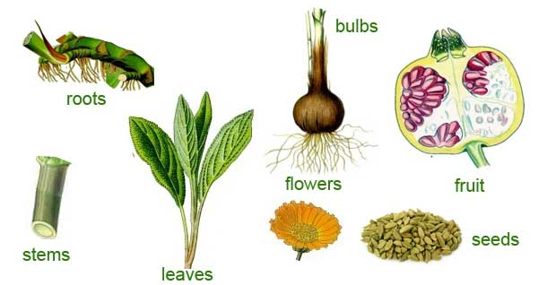 Useful Plant Parts