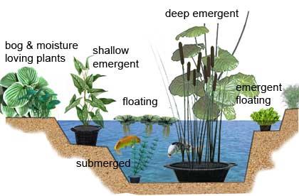 Submerged - Oxygenate