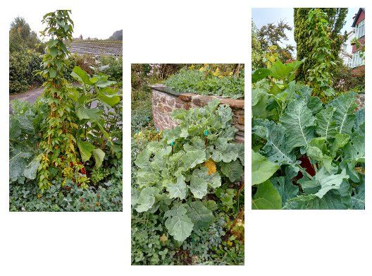 Edible Perennials on a Small Scale – with Incredible Vegetables