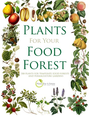 Food Forest Book